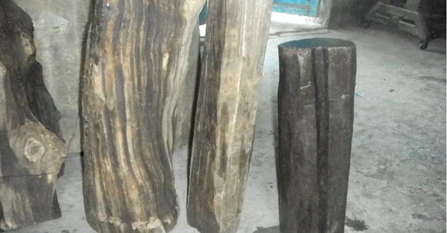 Cây gỗ thủy tùng, có tốt không, là gỗ gì