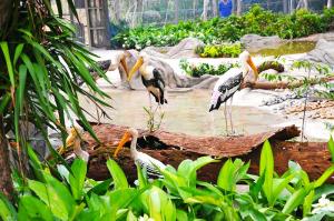 Vườn thú Vinpearl Safari